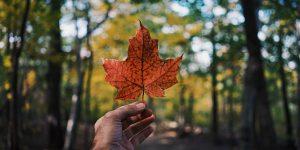 Canada: ILAC acquires GV IELTS test centre